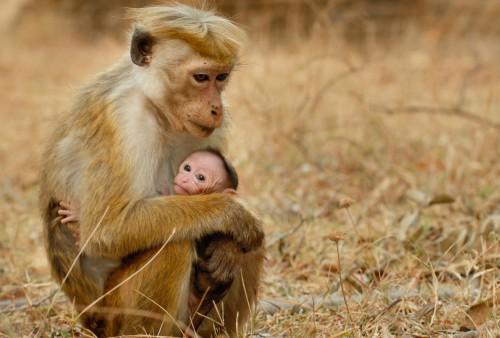 Monkey-Kingdom-1