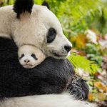Born in China: Lame Animals, by David Bax