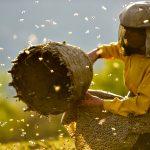 Honeyland: The Sweet Life, by David Bax